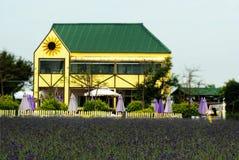De tuin van de lavendel royalty-vrije stock afbeeldingen