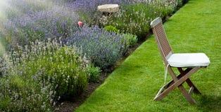 De tuin van de lavendel in de ochtend Stock Foto's