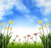 De tuin van de lente Stock Afbeelding