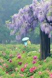 De tuin van de lente Stock Afbeeldingen