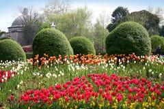 De tuin van de lente in Istanboel Stock Afbeelding