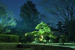 De tuin van de nacht Stock Afbeelding