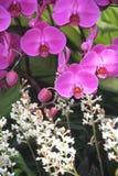 De tuin van de orchidee Stock Foto's