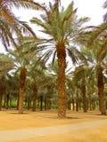 De tuin van de palm Stock Fotografie