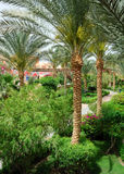 De tuin van de palm Stock Foto