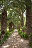 De Tuin van de palm - Elche - Spanje Stock Foto