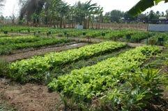 De tuin van de schoolbinnenplaats royalty-vrije stock foto