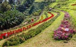 De tuin van de stapbloem Stock Foto's