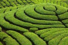 De tuin van de Thee van ba Gua in Taiwan royalty-vrije stock afbeeldingen