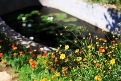 De tuin van de zomer Stock Foto
