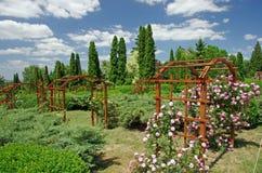 De tuin van de zomer Royalty-vrije Stock Afbeeldingen