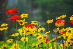 De tuin van de zomer Stock Afbeeldingen