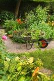 De tuin van de zomer met bloemen stock afbeeldingen