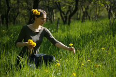 de tuin van de zomerweide stock afbeeldingen