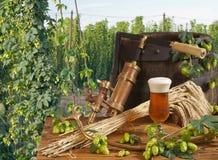 De tuin van het bier en van de hop Stock Afbeelding