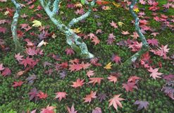 De Tuin van het Ginkakujigebied Stock Afbeelding