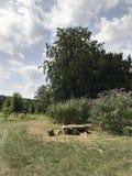 De tuin van het Highclarekasteel stock afbeelding