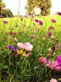 De tuin van het land Royalty-vrije Stock Afbeeldingen