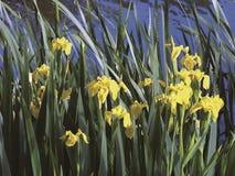 De tuin van het water Royalty-vrije Stock Afbeeldingen