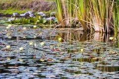 De tuin van het water stock foto