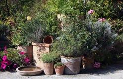 De tuin van kruiden en van bloemen in de potten Royalty-vrije Stock Afbeeldingen