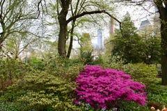 De tuin van New York, centraal park stock afbeeldingen