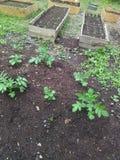 De tuin van Noord-Carolina Royalty-vrije Stock Afbeeldingen