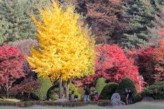 De Tuin van Ochtendrust Stock Fotografie