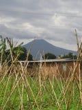 De Tuin van Rwanda van de vulkaan Royalty-vrije Stock Afbeeldingen