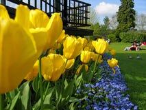 De Tuin van tulpen stock afbeeldingen