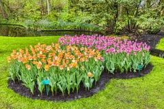 De tuin van tulpen Stock Afbeelding