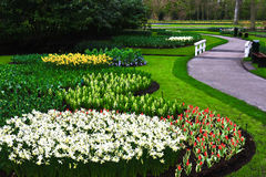 De Tuin van tulpen, Nederland Stock Afbeelding