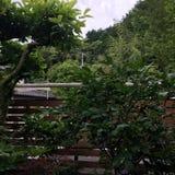 In de tuin royalty-vrije stock fotografie