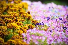 De tuinachtergrond van de bloembloei Royalty-vrije Stock Foto's