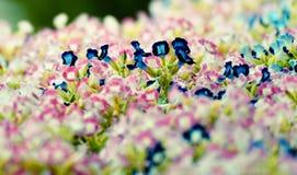 De tuinachtergrond van de bloembloei Royalty-vrije Stock Afbeelding