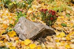 De tuinbed van de de herfstbloem Steen met rode chrysant royalty-vrije stock afbeelding