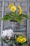 De tuinbloemen van de lente in potten Royalty-vrije Stock Foto