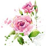 De tuinbloemen van de zomer De illustratie van de waterverf Stock Afbeelding