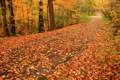 De Tuinen van Edward in Toronto is een uitbarsting van kleur op de dag van de stille Herfst. Royalty-vrije Stock Foto
