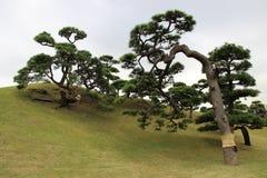 De tuinen van Hamarikyu, Tokyo stock fotografie