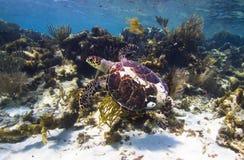 De tuinen van het koraal Stock Fotografie