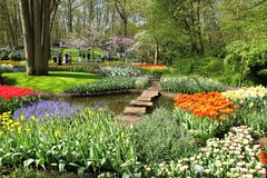 De Tuinen van Keukenhof Tulpen macrofoto Royalty-vrije Stock Afbeeldingen