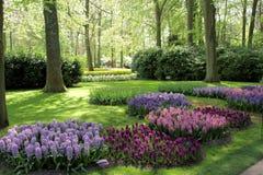De Tuinen van Keukenhof Tulpen macrofoto Stock Foto