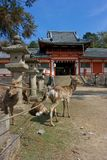 De tuinen van Nara Stock Foto