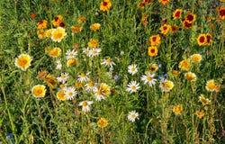 De Tuinen van Wildflowersvandusen stock afbeeldingen