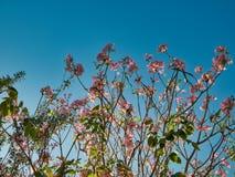De tuinen zijn tot bloei komend in het midden van de stad royalty-vrije stock foto's