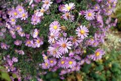 De tuinklooster van bloembed bloeiend bloemen in Rostov Stock Afbeelding
