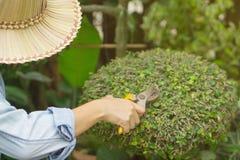 De tuinlieden zijn scherpe bomen royalty-vrije stock foto