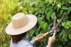 De tuinlieden zijn scherpe bomen royalty-vrije stock afbeeldingen