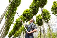 De tuinman behandelt de jonge bomen stock foto